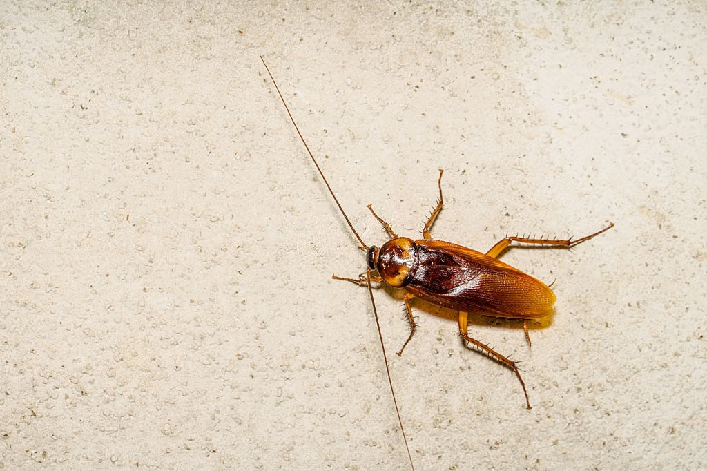 Cockroach Control, Pest Control in Feltham, Hanworth, TW13. Call Now 020 8166 9746