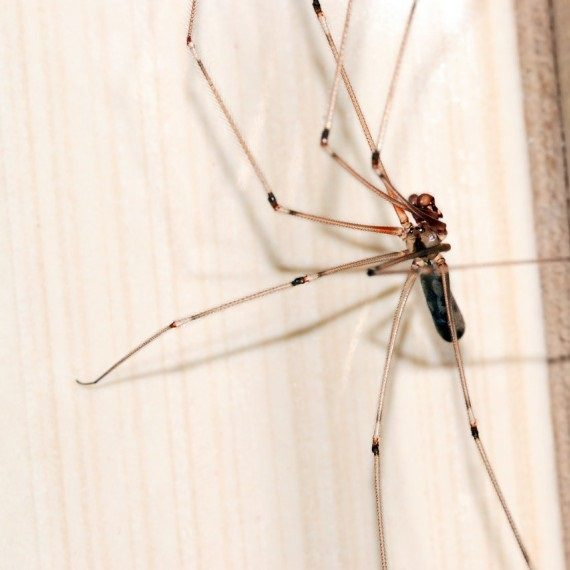 Spiders, Pest Control in Feltham, Hanworth, TW13. Call Now! 020 8166 9746