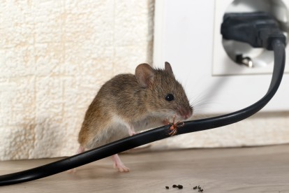 Pest Control in Feltham, Hanworth, TW13. Call Now! 020 8166 9746